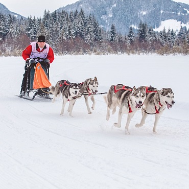 Sled dog race in St. Ulrich am Pillersee